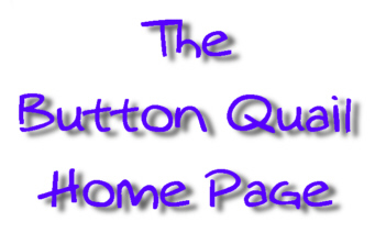The Button Quail Home Page